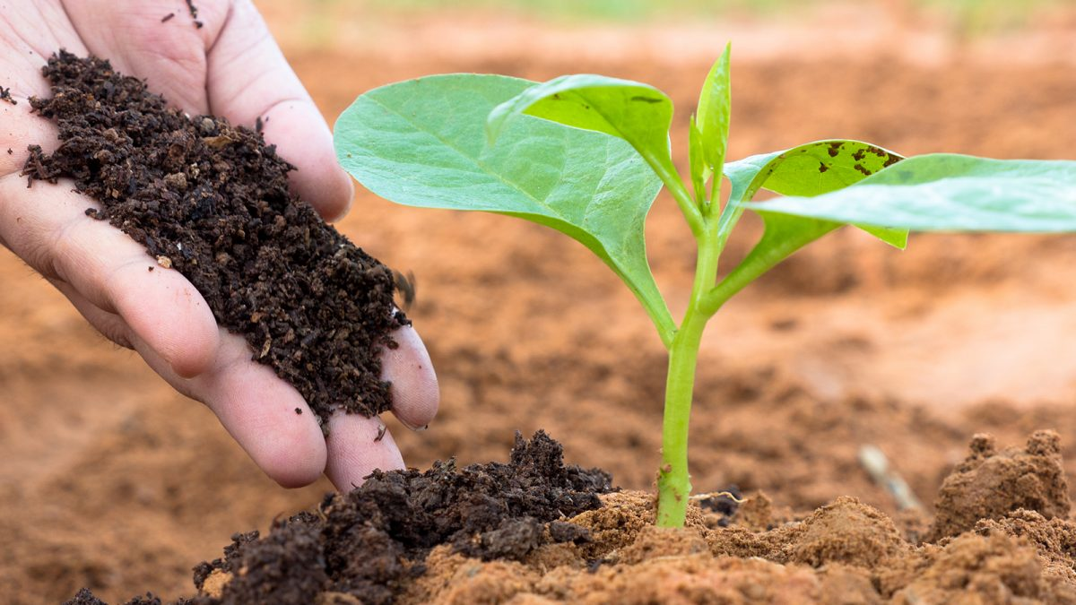 Cara Mudah Membuat Pupuk Kompos Dari Sampah Organik Berkeluarga