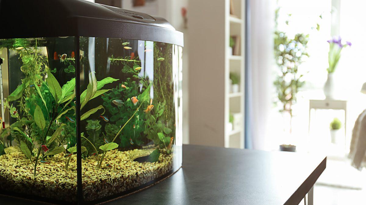 Cara Mudah Membuat Aquascape Dengan Budget Tipis Berkeluarga