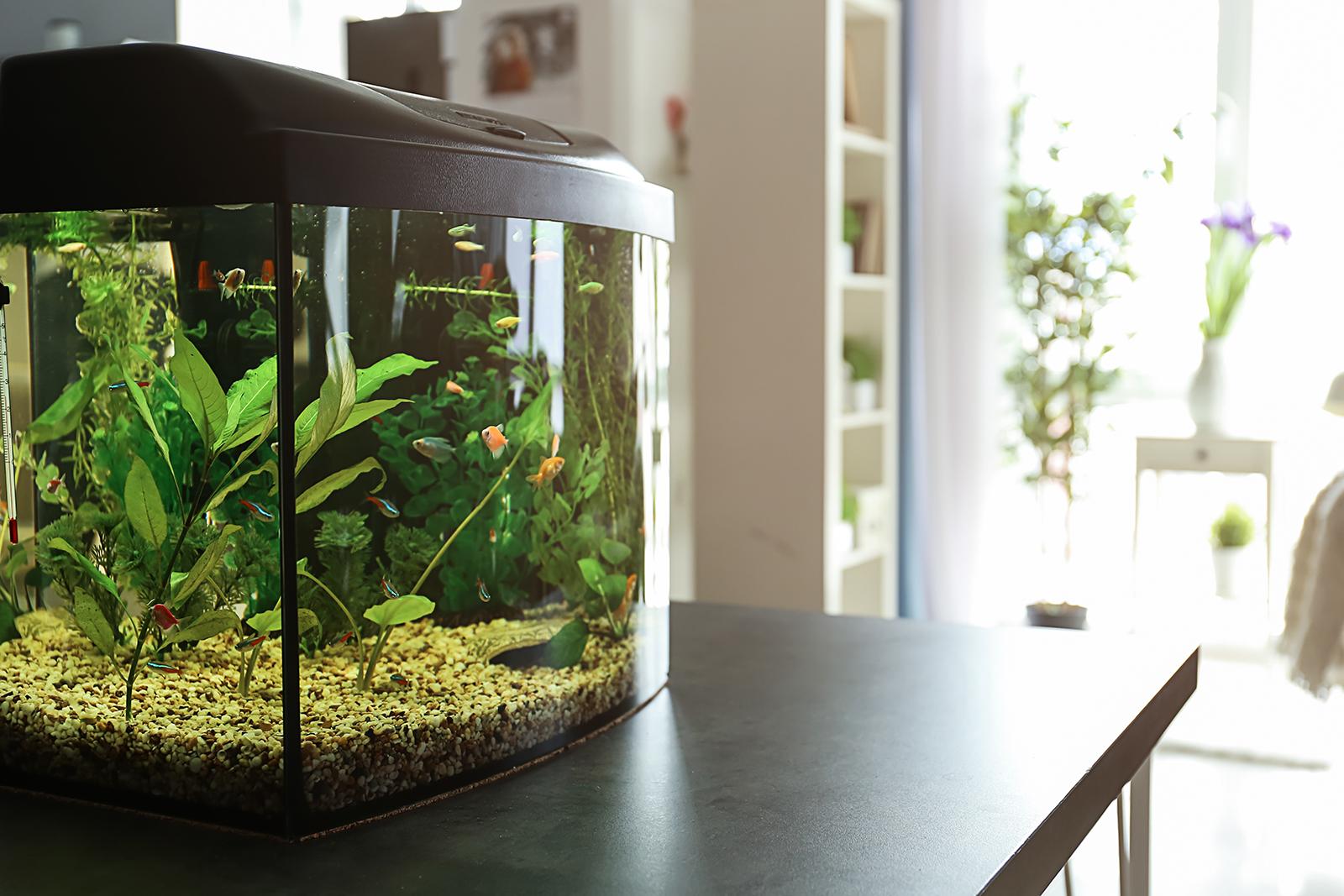 Cara Mudah Membuat Aquascape dengan Budget Tipis - Berkeluarga