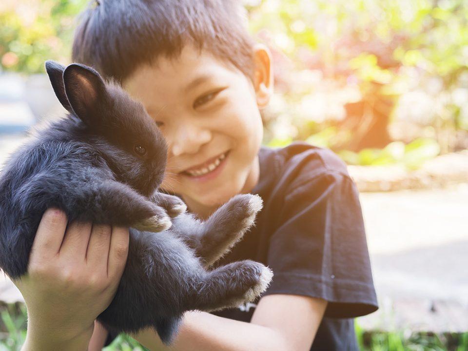 Rasa sayang anak pada hewan