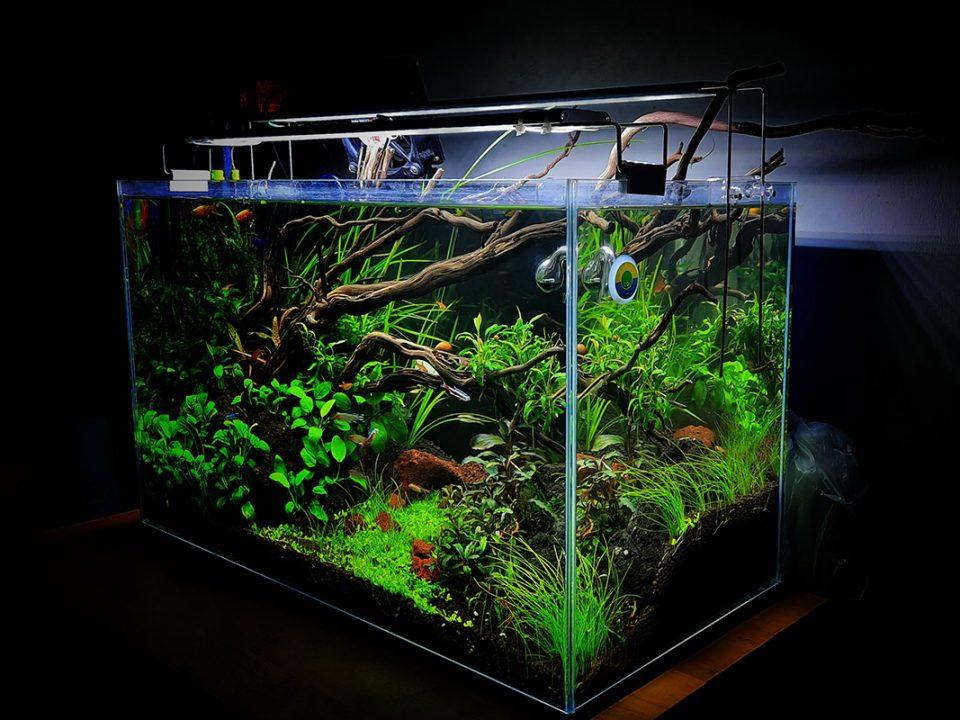 rekomendasi tanaman aquascape