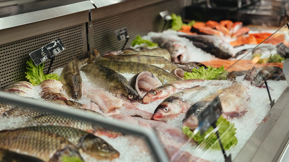 cara menentukan kesegaran ikan