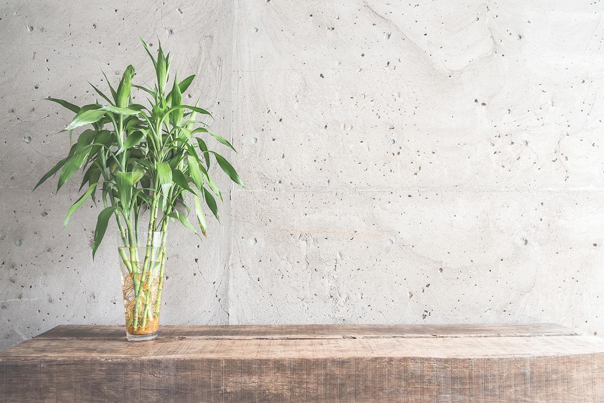 Bambu mini untuk meja kerja