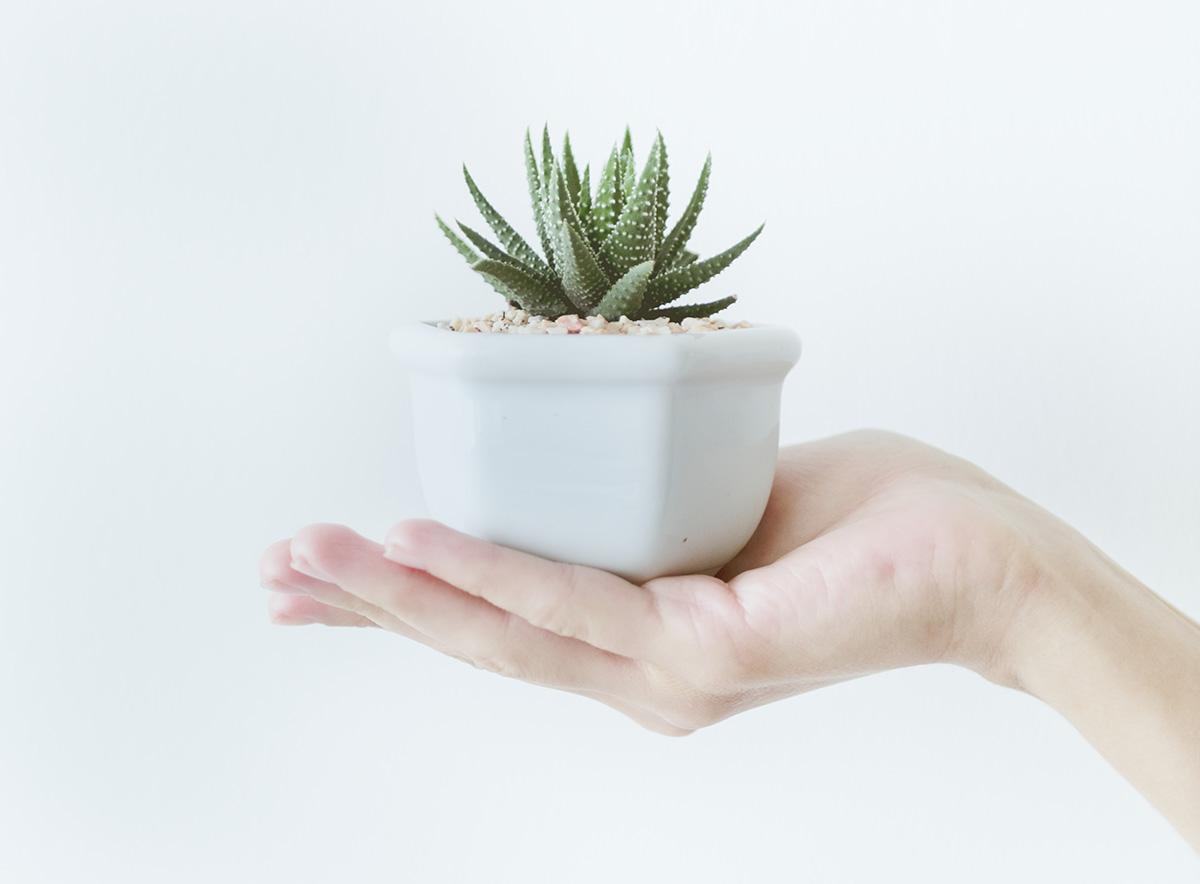 Kaktus untuk di meja kerja
