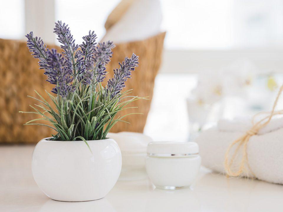 Lavender mengusir lalat
