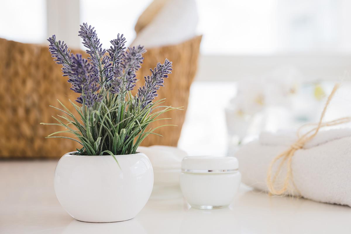 Bunga lavender ampuh usir nyamuk