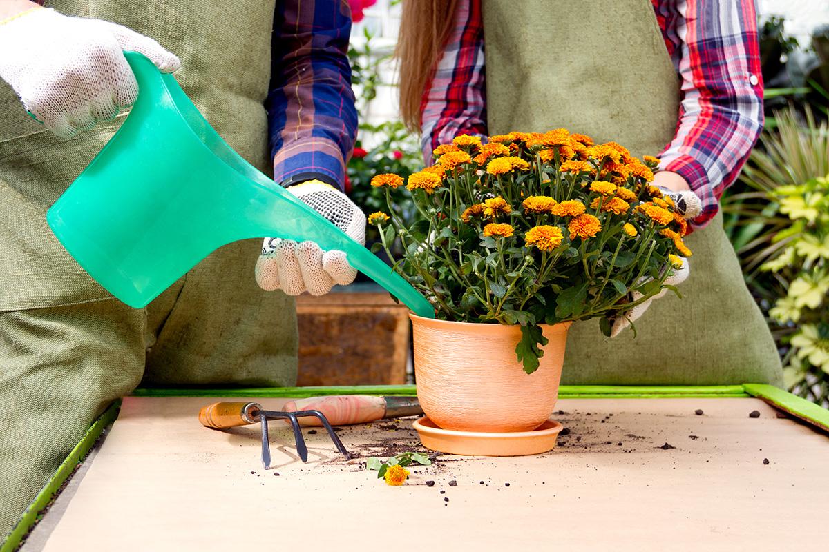 Cara merawat tanaman hias dalam ruangan