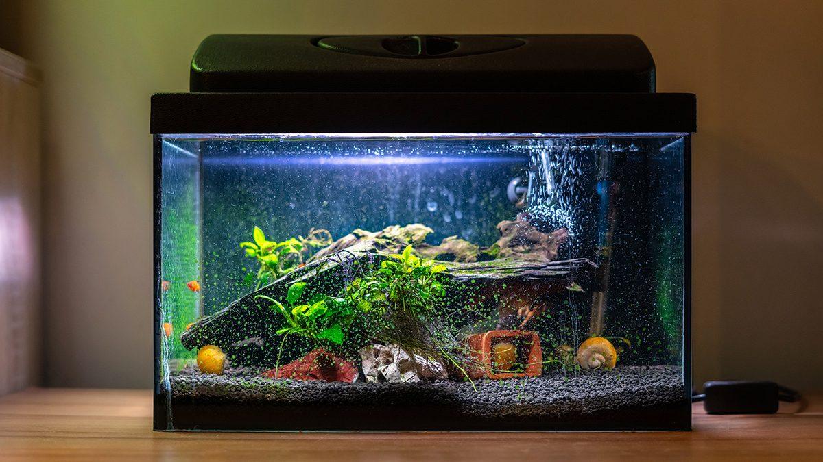 Ide Hiasan Aquarium Yang Cantik Dan Ramah Kantong Berkeluarga Hiasan akuarium air tawar