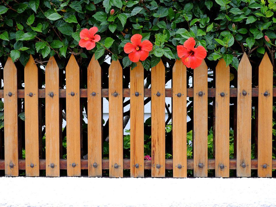 rekomendasi tanaman pagar