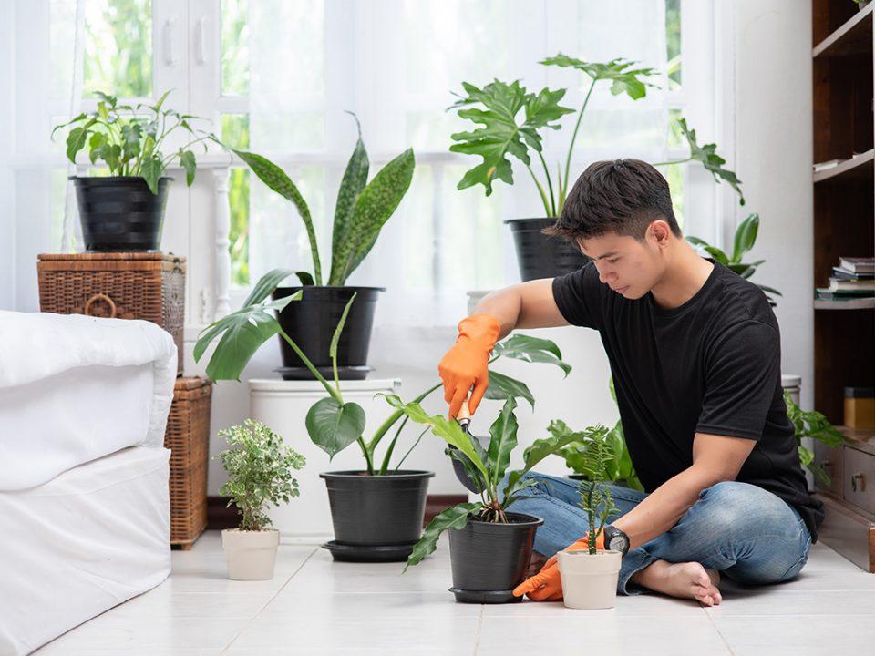 Cara merawat tanaman dalam ruangan