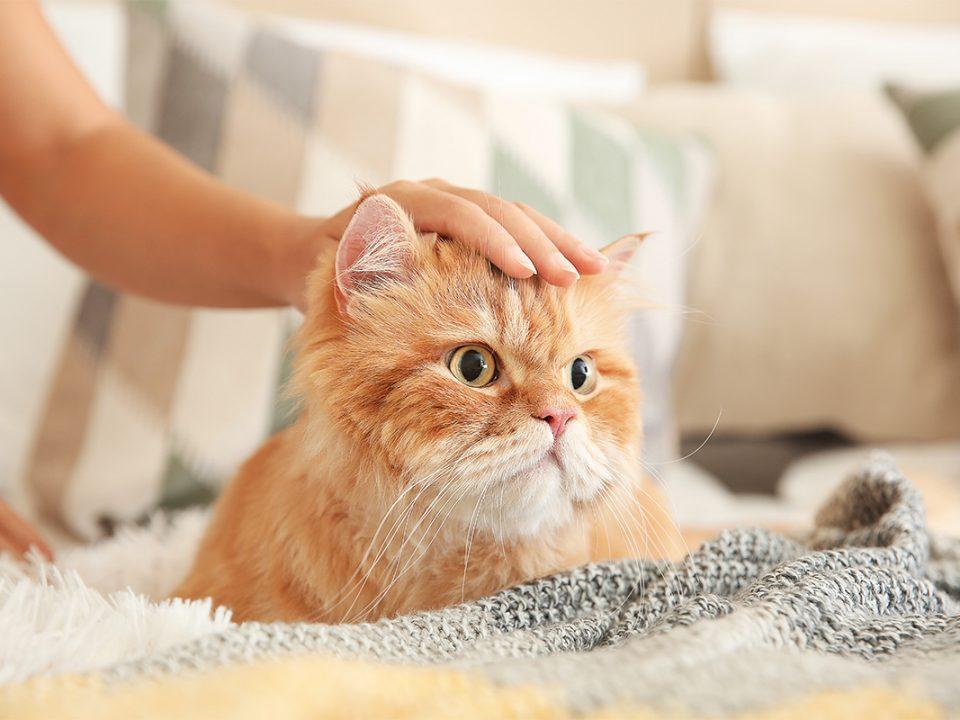 Ras kucing