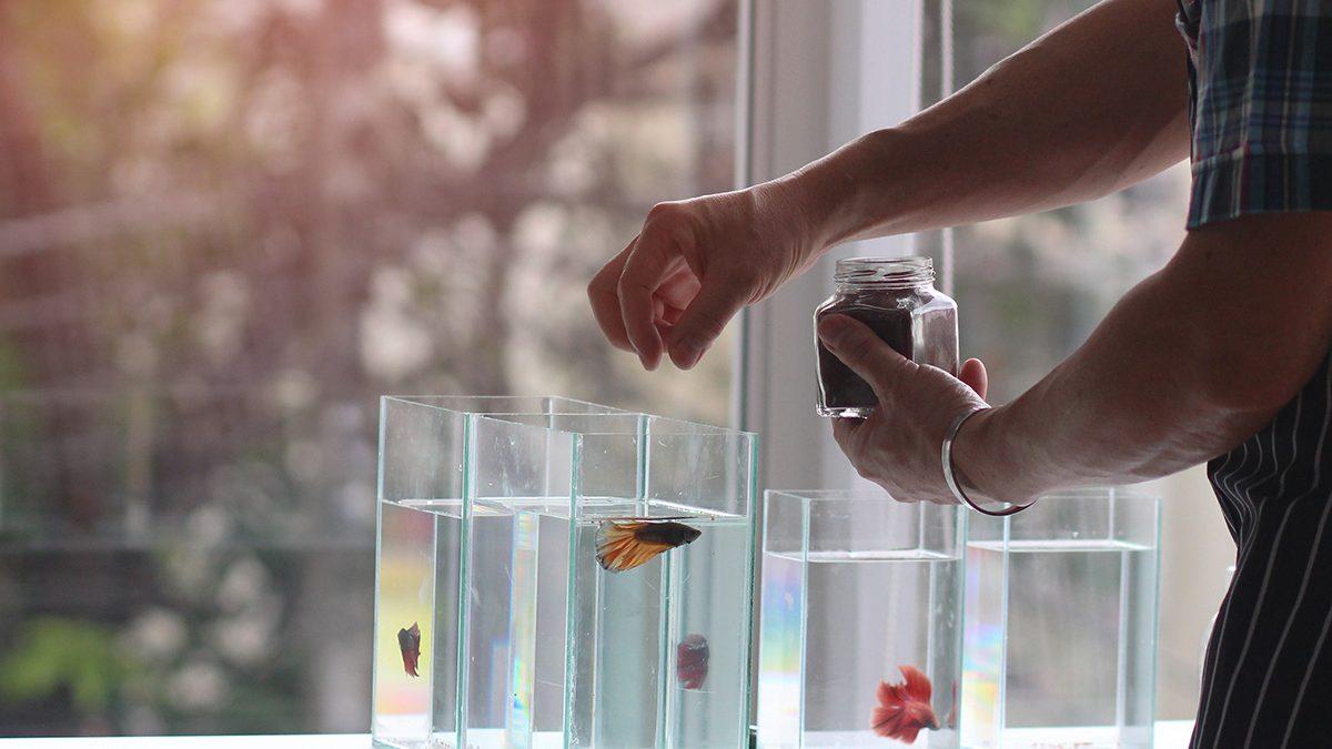 7 Makanan Ikan Cupang Terbaik, Bikin Warna Makin Cantik - Berkeluarga