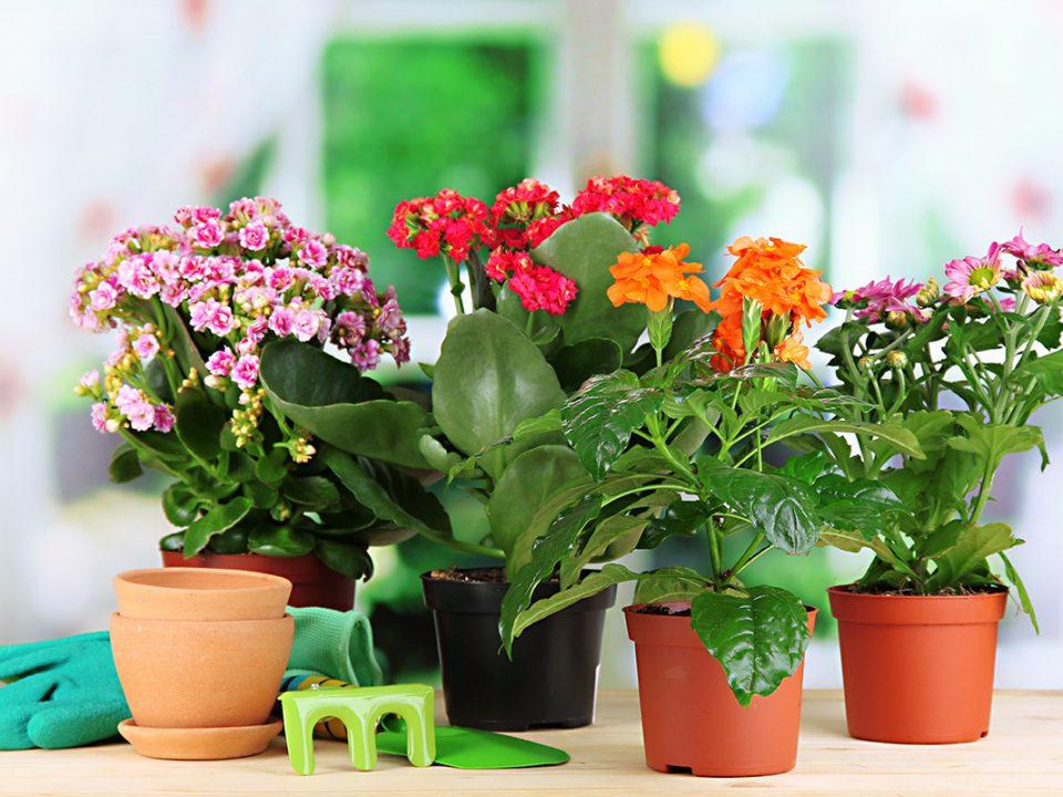 Memilih Pot Bunga