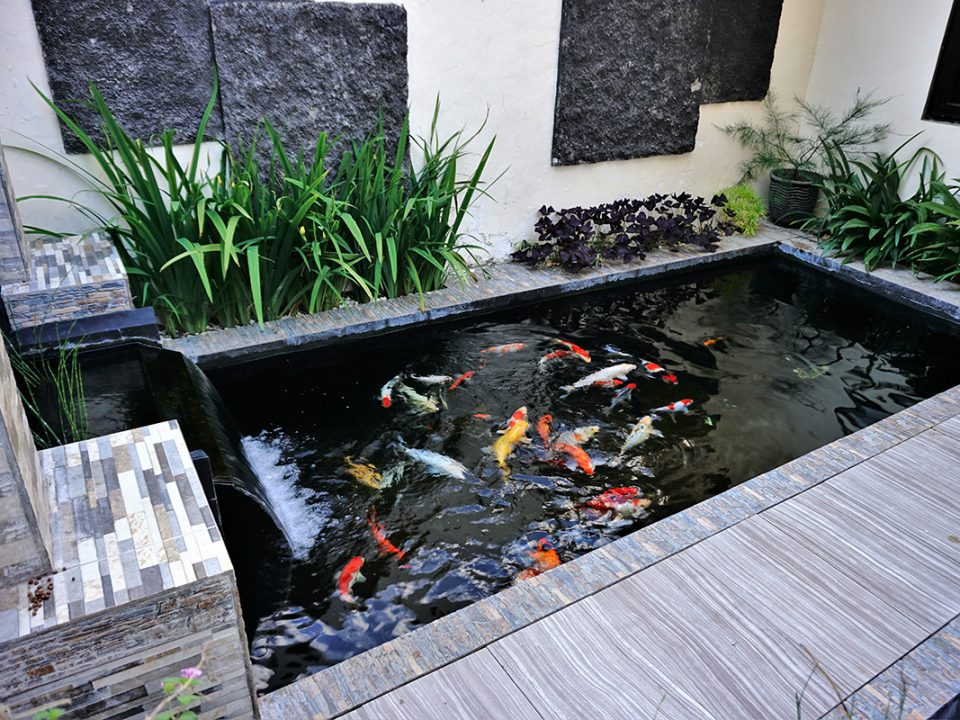 Kolam Ikan Minimalis