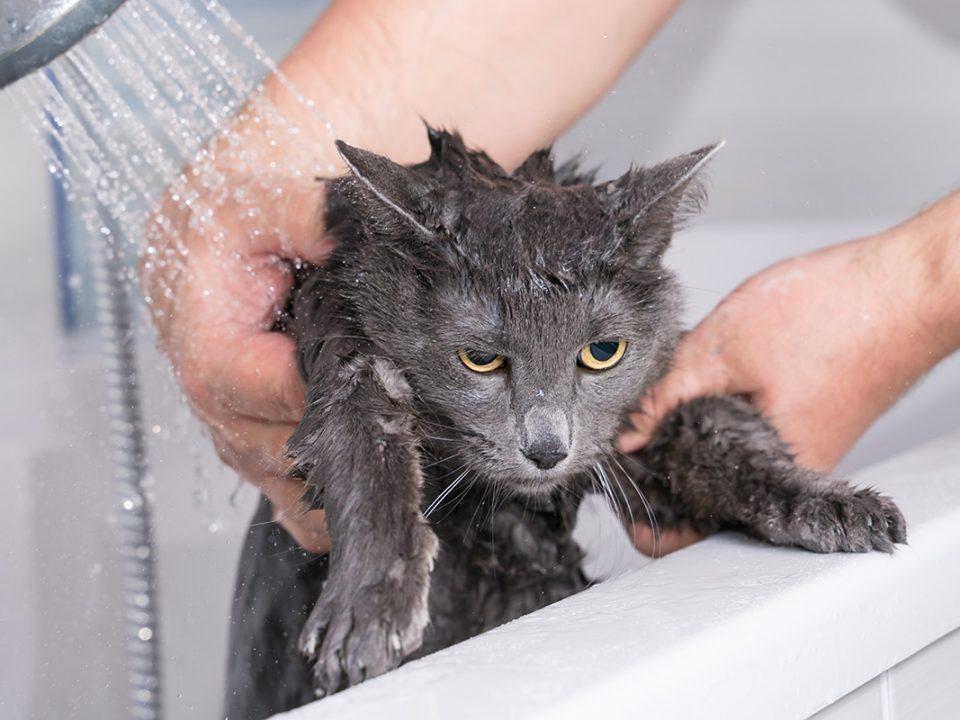 Penyakit Kulit Kucing