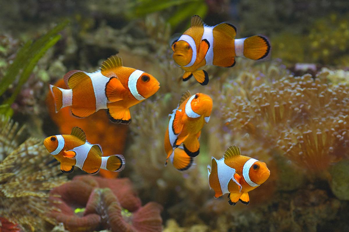 7 Rekomendasi Ikan Hias Air Laut Dengan Warna Cantik Berkeluarga