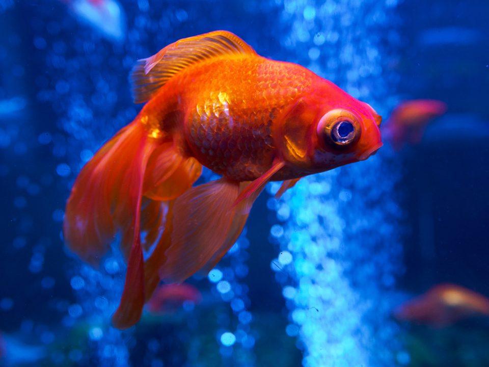 Ciri Ikan Sakit