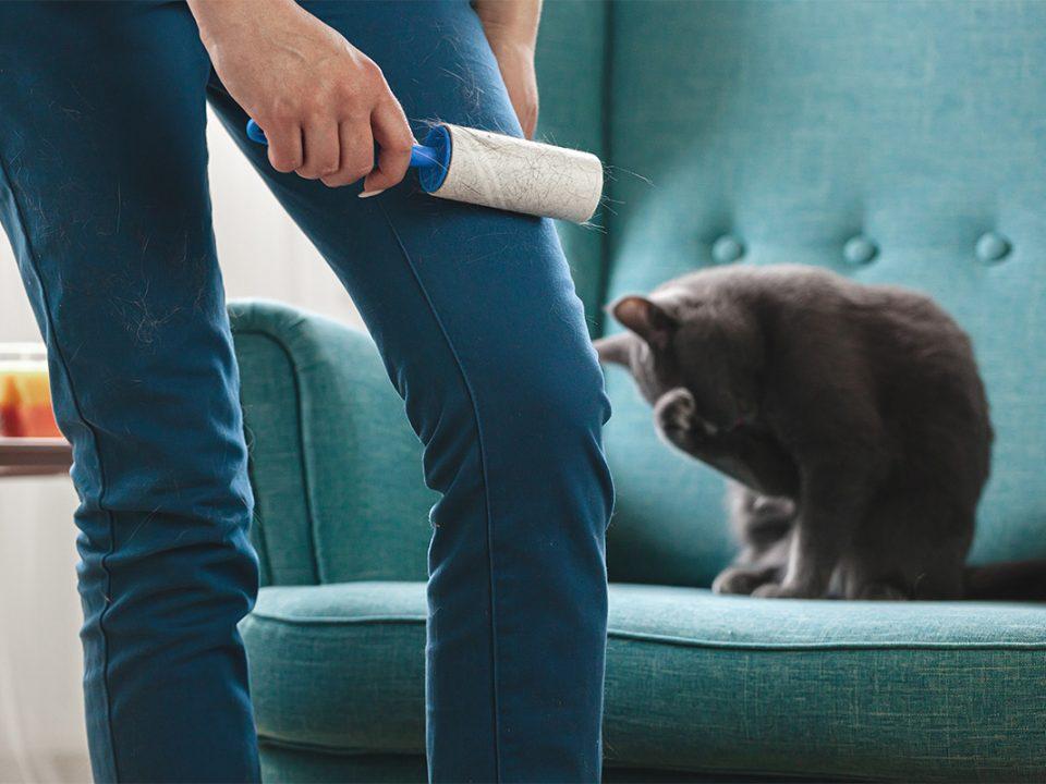 Menghilangkan Bulu Kucing